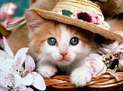 你愿意做母老虎还是小猫咪